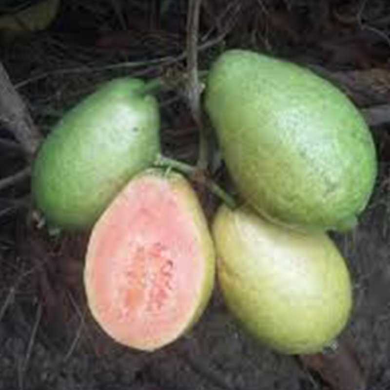 Guava Mexican Cream