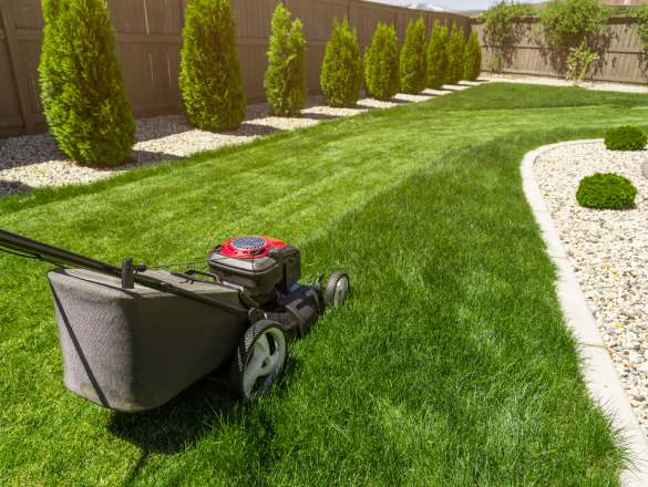 Garden maintenance service. Maintain garden in a beautiful way